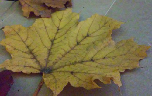 Gather different kinds of your favorite leaves for this simple project.